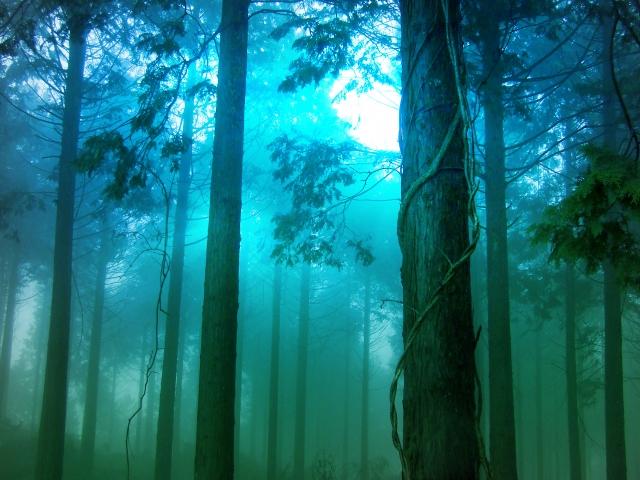 先の見えない不安な森20170414