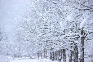 冬景色20171219