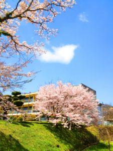 卒業式シーズン校舎と桜のイメージ20180330
