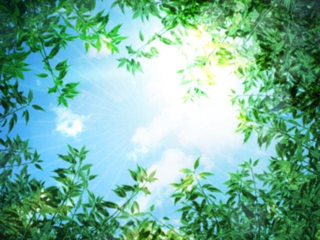 新緑と初夏の日差しイメージ20180517