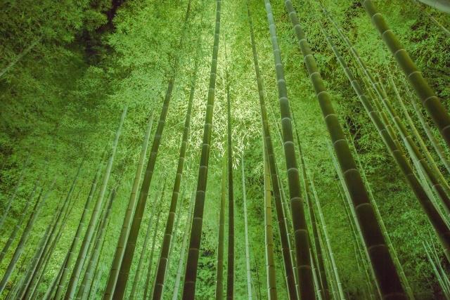 竹の香薫る竹林風景イメージ20180511