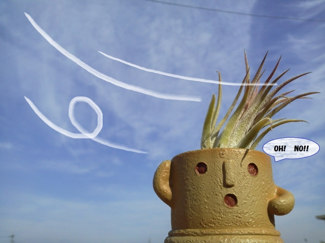 北風が埴輪くんに吹き付ける20200207