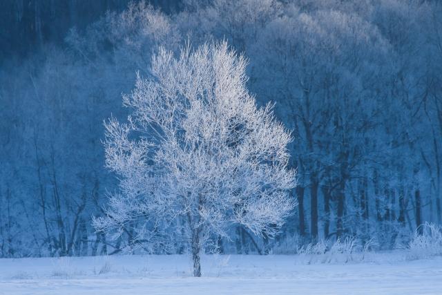 凍てつくイメージ20200306