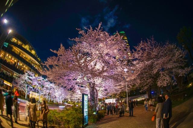 夜桜風景20200327