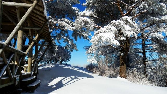 雪景色20210226